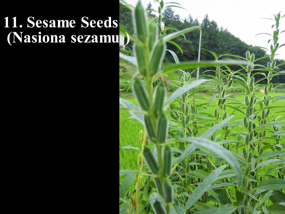 11. Sesame Seeds (Nasiona sezamu )