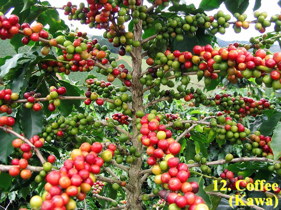 12. Coffee (Kawa)