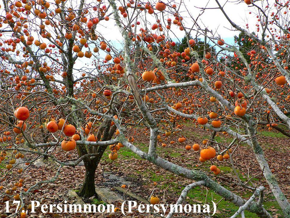 17. Persimmon (Persymona)