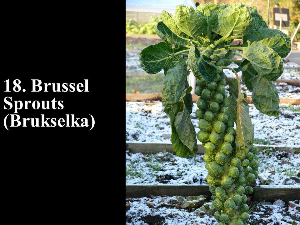 18. Brussel Sprouts (Brukselka)