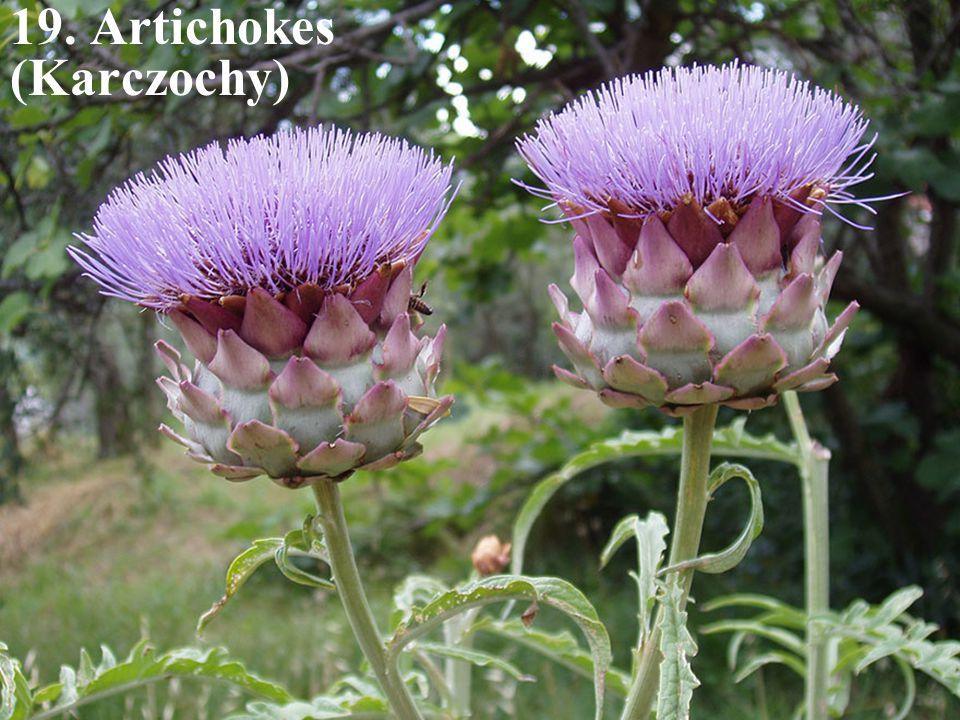 19. Artichokes (Karczochy)