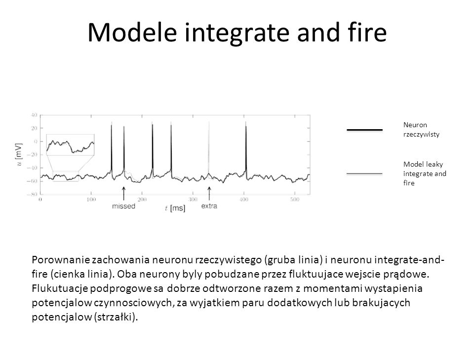 Modele integrate and fire