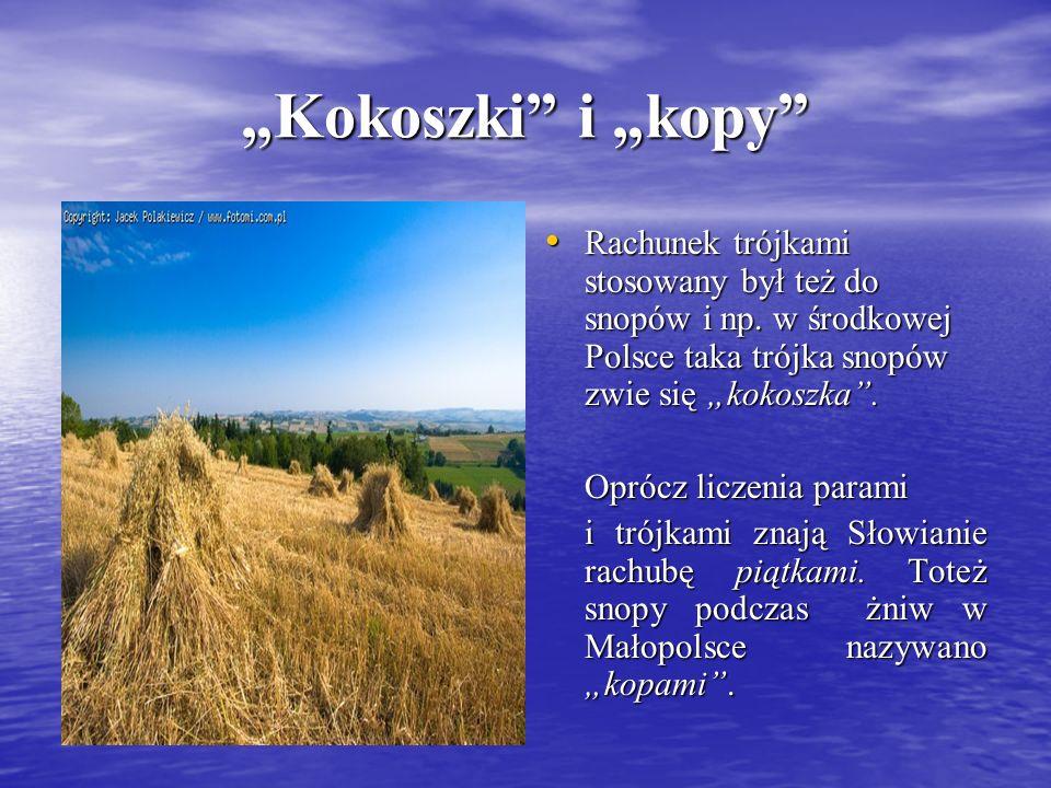 """""""Kokoszki i """"kopy Rachunek trójkami stosowany był też do snopów i np. w środkowej Polsce taka trójka snopów zwie się """"kokoszka ."""