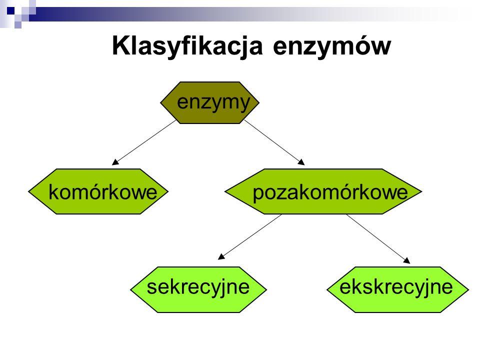 Klasyfikacja enzymów enzymy komórkowe pozakomórkowe sekrecyjne