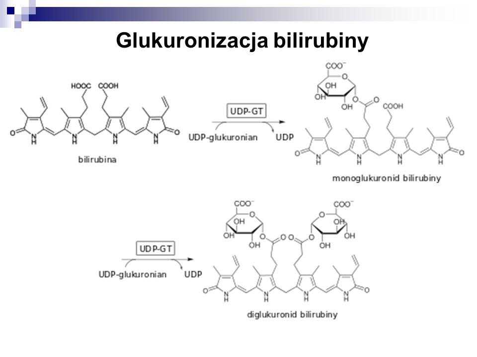 Glukuronizacja bilirubiny