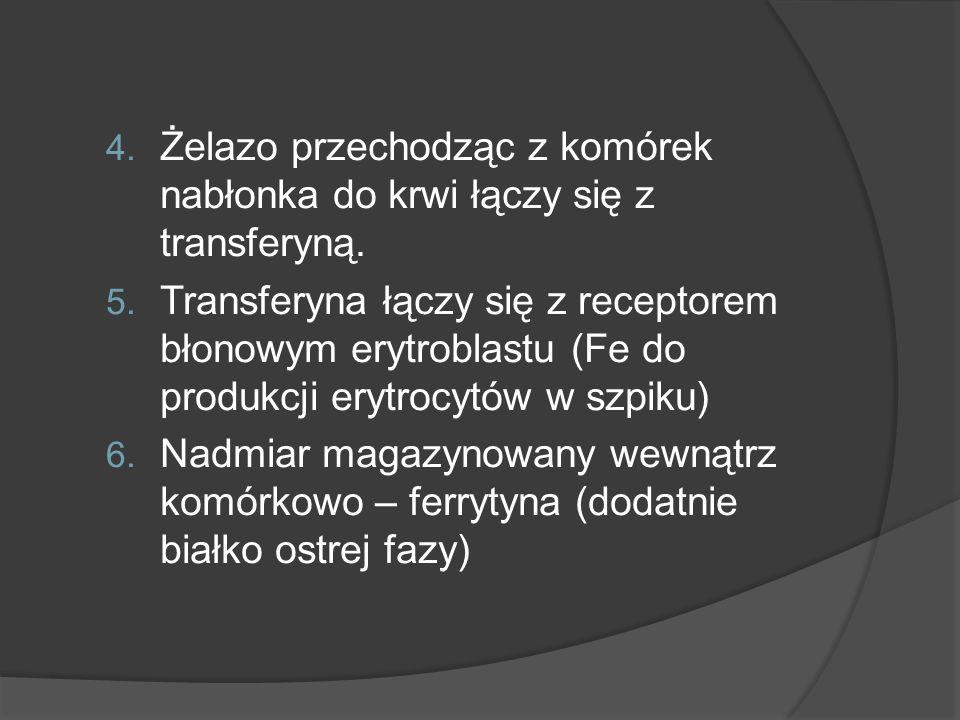 Żelazo przechodząc z komórek nabłonka do krwi łączy się z transferyną.
