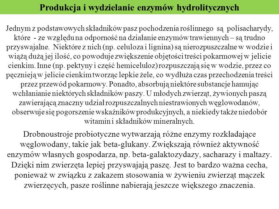 Produkcja i wydzielanie enzymów hydrolitycznych