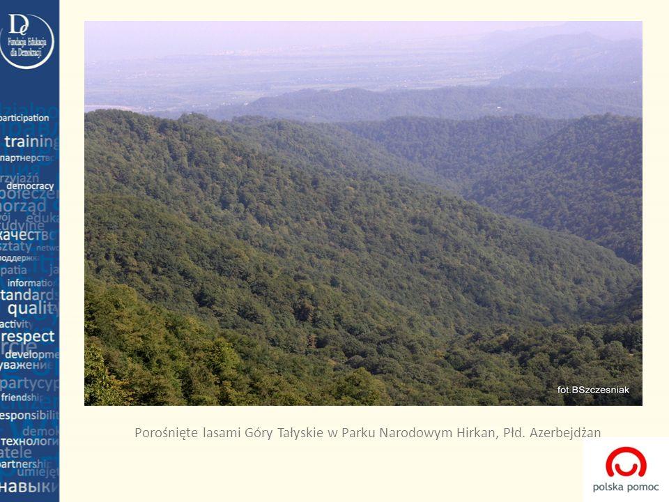 Porośnięte lasami Góry Tałyskie w Parku Narodowym Hirkan, Płd