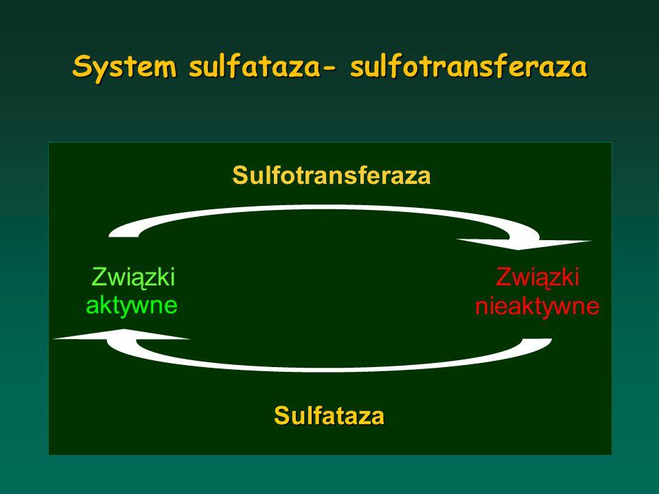 System sulfataza- sulfotransferaza