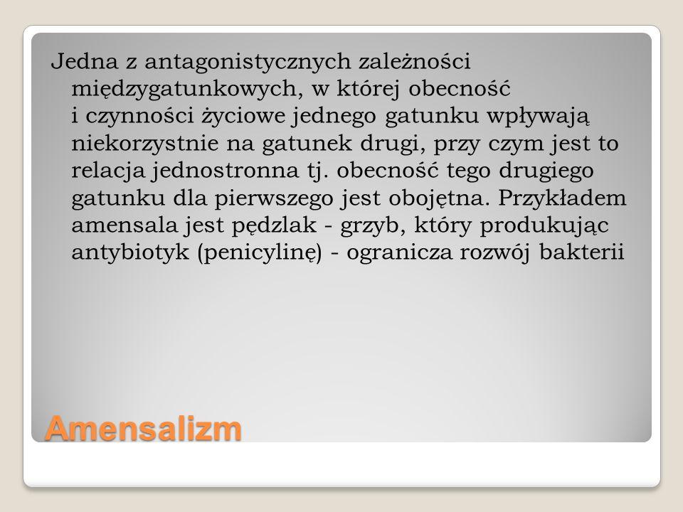Jedna z antagonistycznych zależności międzygatunkowych, w której obecność i czynności życiowe jednego gatunku wpływają niekorzystnie na gatunek drugi, przy czym jest to relacja jednostronna tj. obecność tego drugiego gatunku dla pierwszego jest obojętna. Przykładem amensala jest pędzlak - grzyb, który produkując antybiotyk (penicylinę) - ogranicza rozwój bakterii