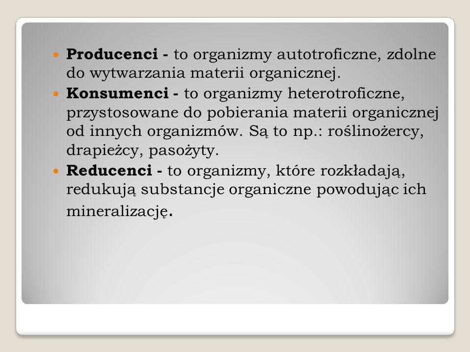 Producenci - to organizmy autotroficzne, zdolne do wytwarzania materii organicznej.