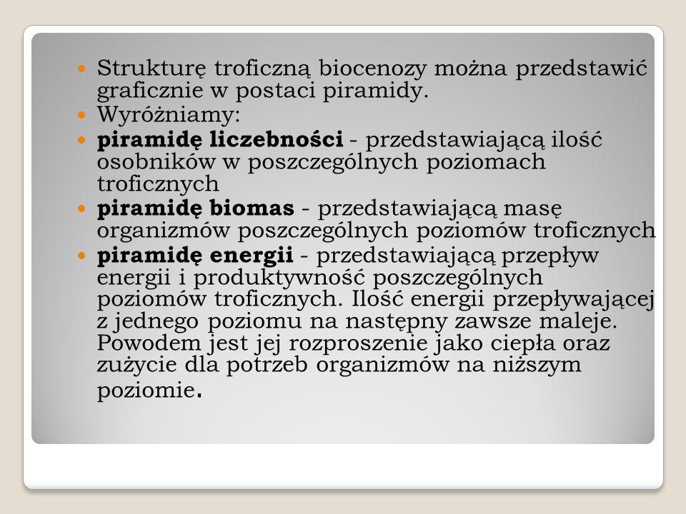 Strukturę troficzną biocenozy można przedstawić graficznie w postaci piramidy.