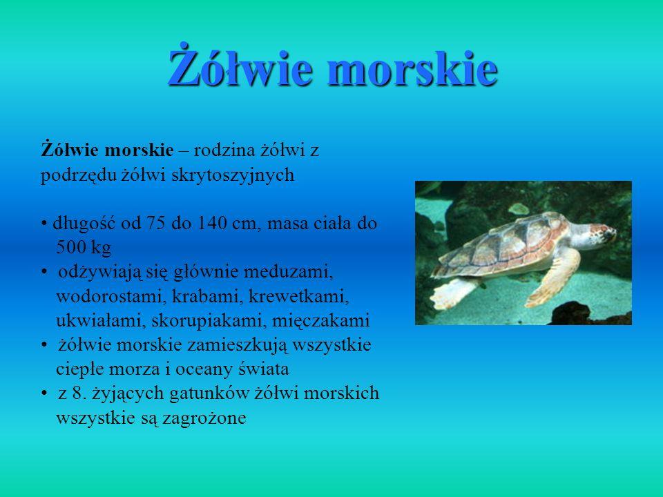 Żółwie morskie Żółwie morskie – rodzina żółwi z podrzędu żółwi skrytoszyjnych. długość od 75 do 140 cm, masa ciała do.
