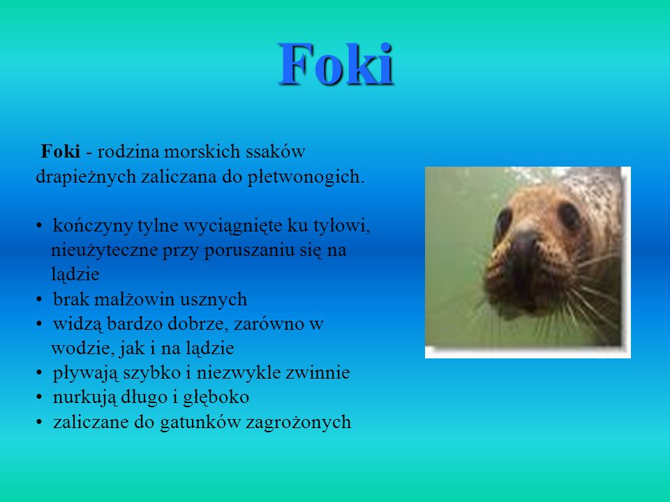 FokiFoki - rodzina morskich ssaków drapieżnych zaliczana do płetwonogich. kończyny tylne wyciągnięte ku tyłowi,