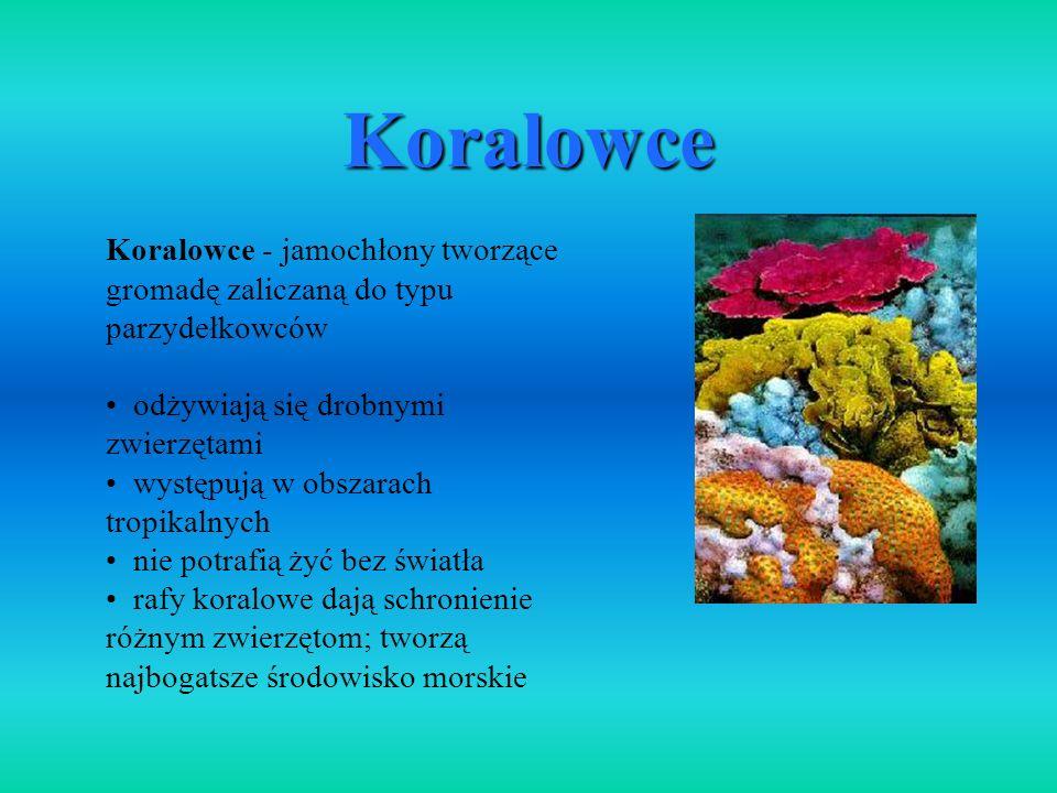 Koralowce Koralowce - jamochłony tworzące gromadę zaliczaną do typu parzydełkowców. odżywiają się drobnymi zwierzętami.