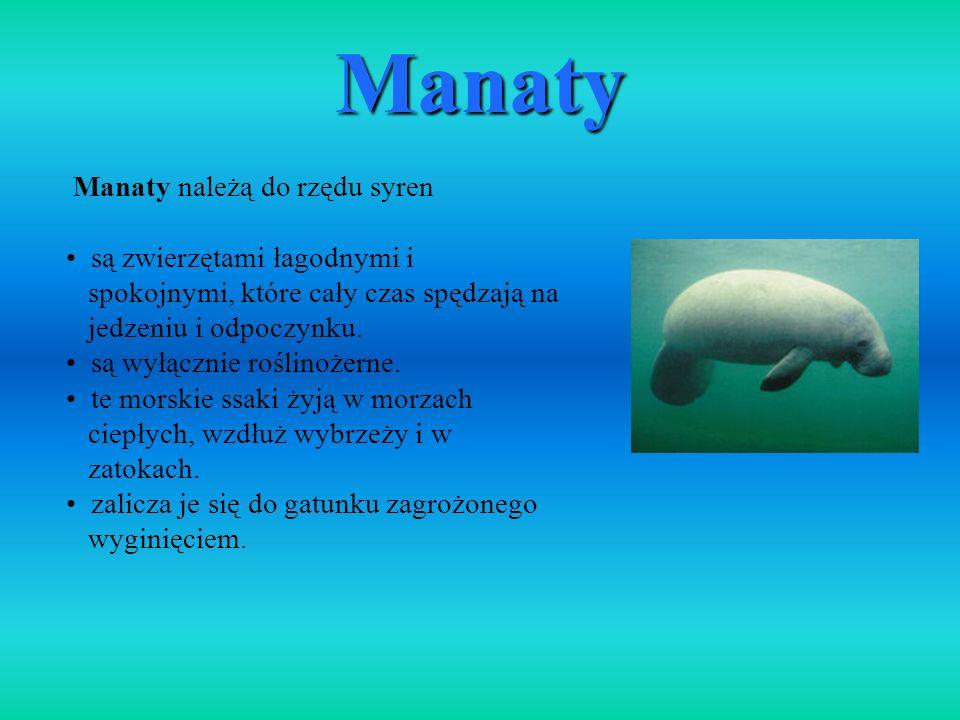 Manaty Manaty należą do rzędu syren są zwierzętami łagodnymi i