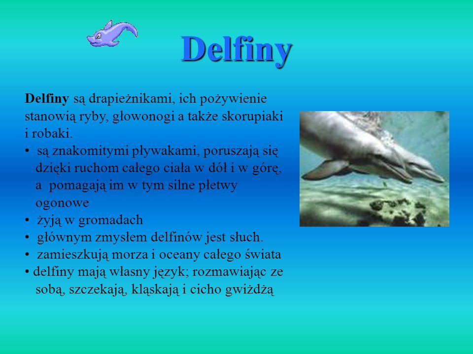 Delfiny Delfiny są drapieżnikami, ich pożywienie stanowią ryby, głowonogi a także skorupiaki i robaki.