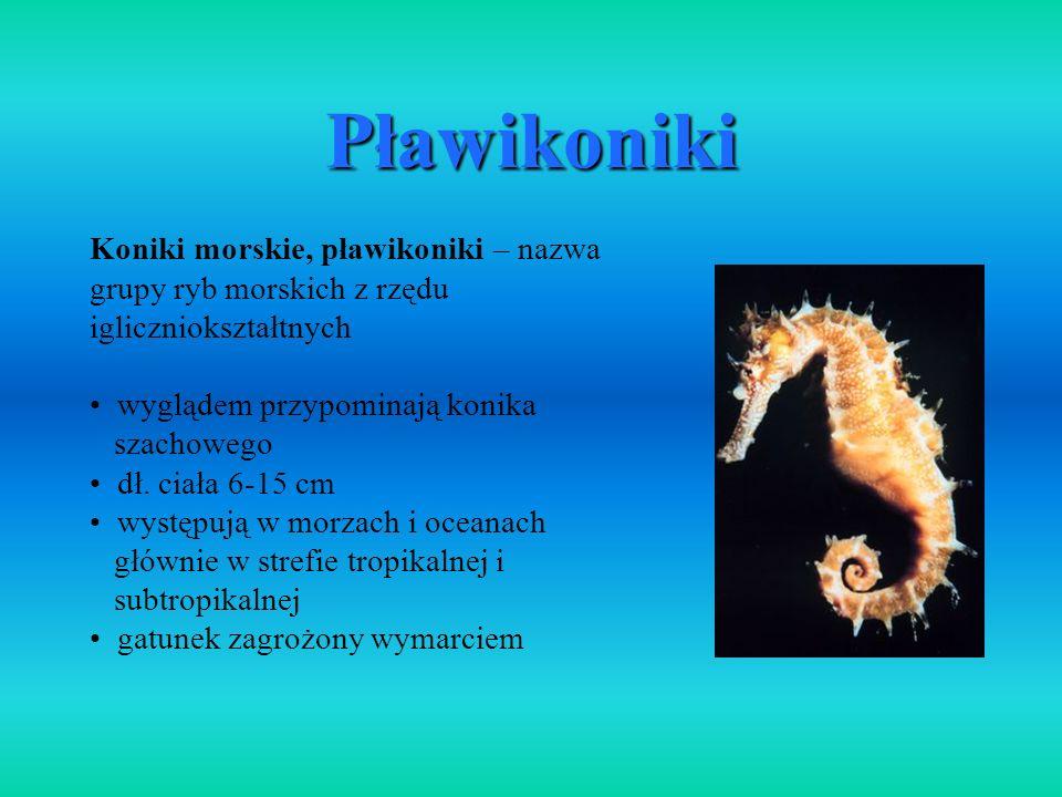 PławikonikiKoniki morskie, pławikoniki – nazwa grupy ryb morskich z rzędu igliczniokształtnych. wyglądem przypominają konika.