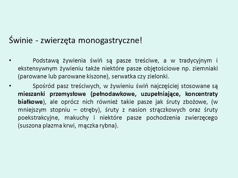 Świnie - zwierzęta monogastryczne!