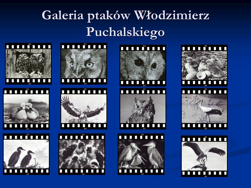 Galeria ptaków Włodzimierz Puchalskiego