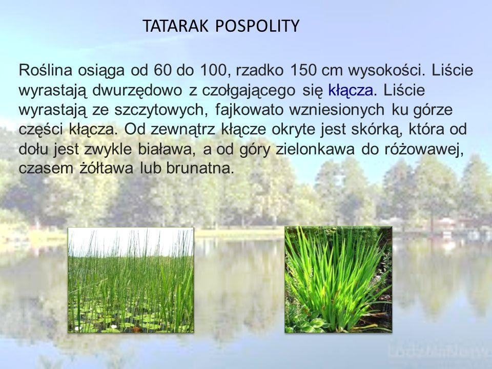 TATARAK POSPOLITY