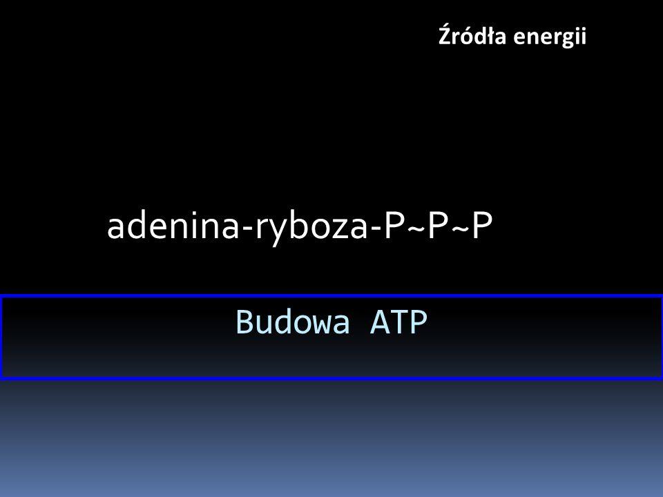 adenina-ryboza-P~P~P