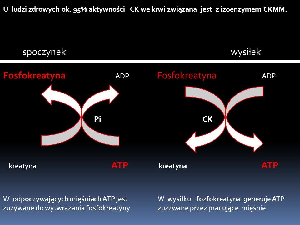 Fosfokreatyna ADP Fosfokreatyna ADP