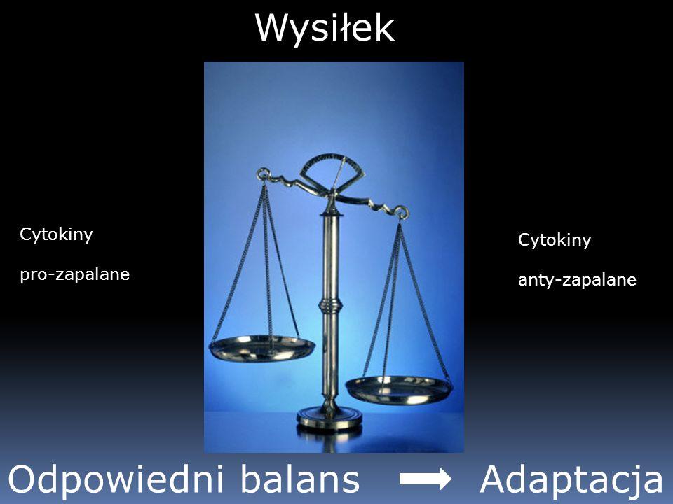 Odpowiedni balans Adaptacja