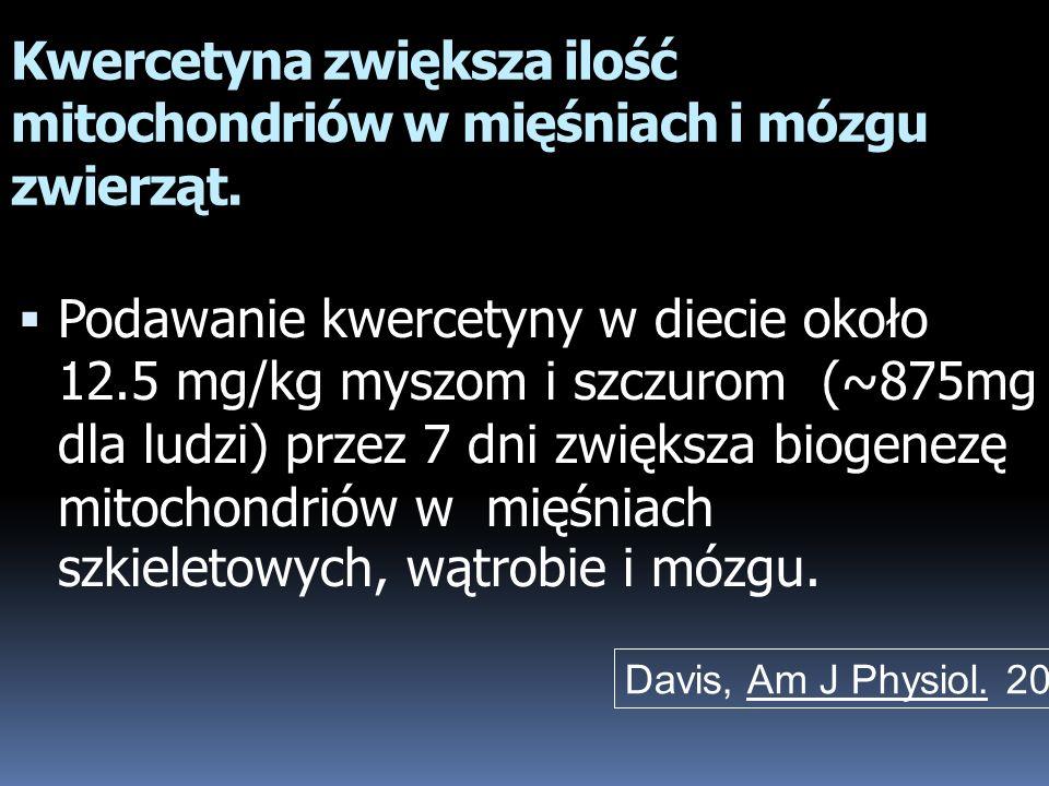 Kwercetyna zwiększa ilość mitochondriów w mięśniach i mózgu zwierząt.