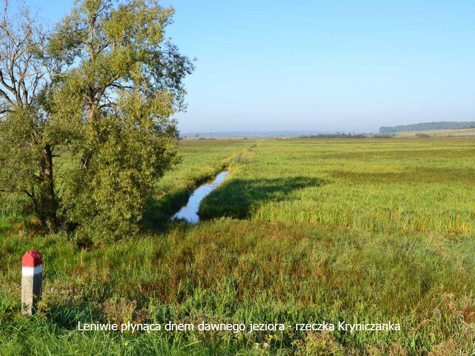 Leniwie płynąca dnem dawnego jeziora - rzeczka Kryniczanka