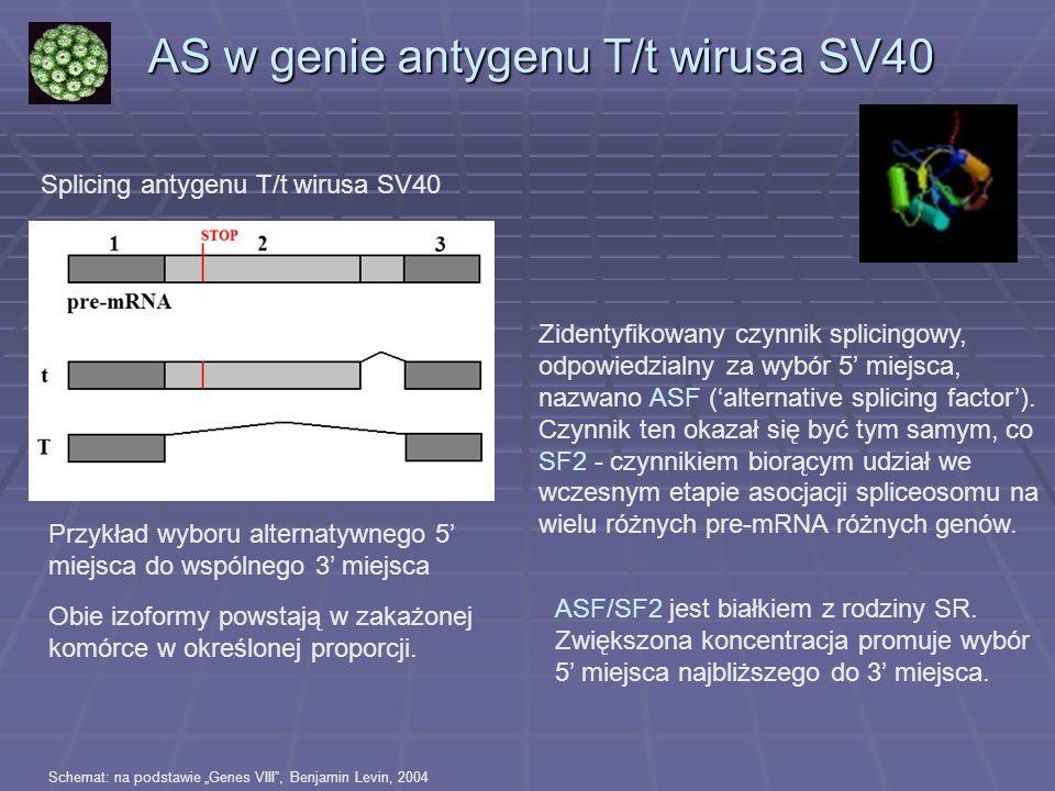 AS w genie antygenu T/t wirusa SV40