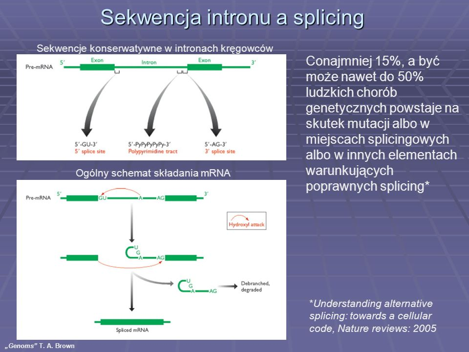 Sekwencja intronu a splicing