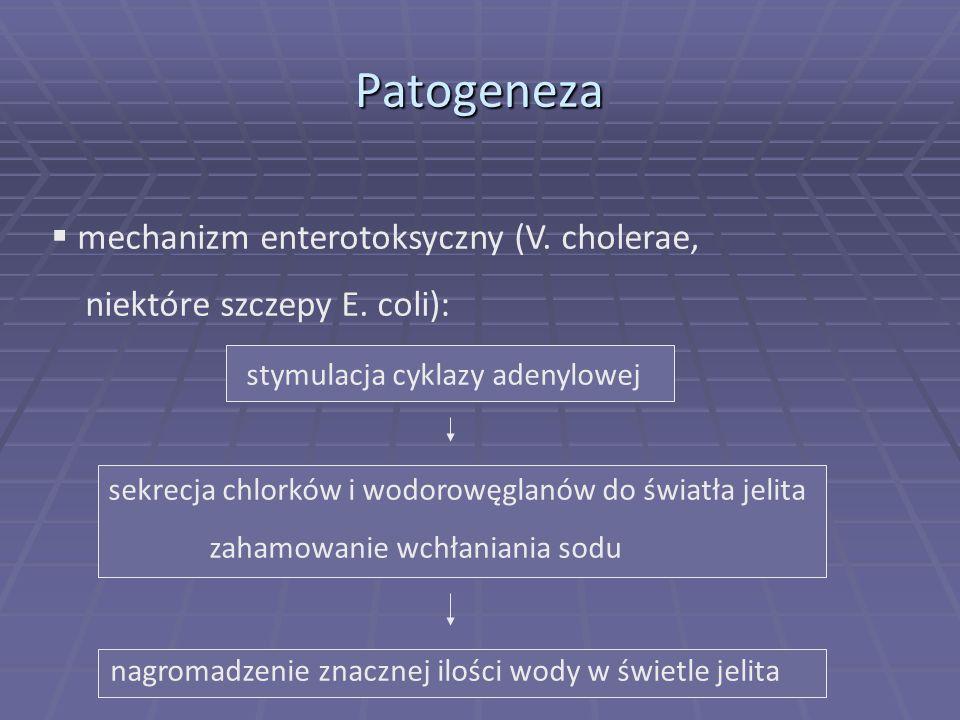 Patogeneza mechanizm enterotoksyczny (V. cholerae,