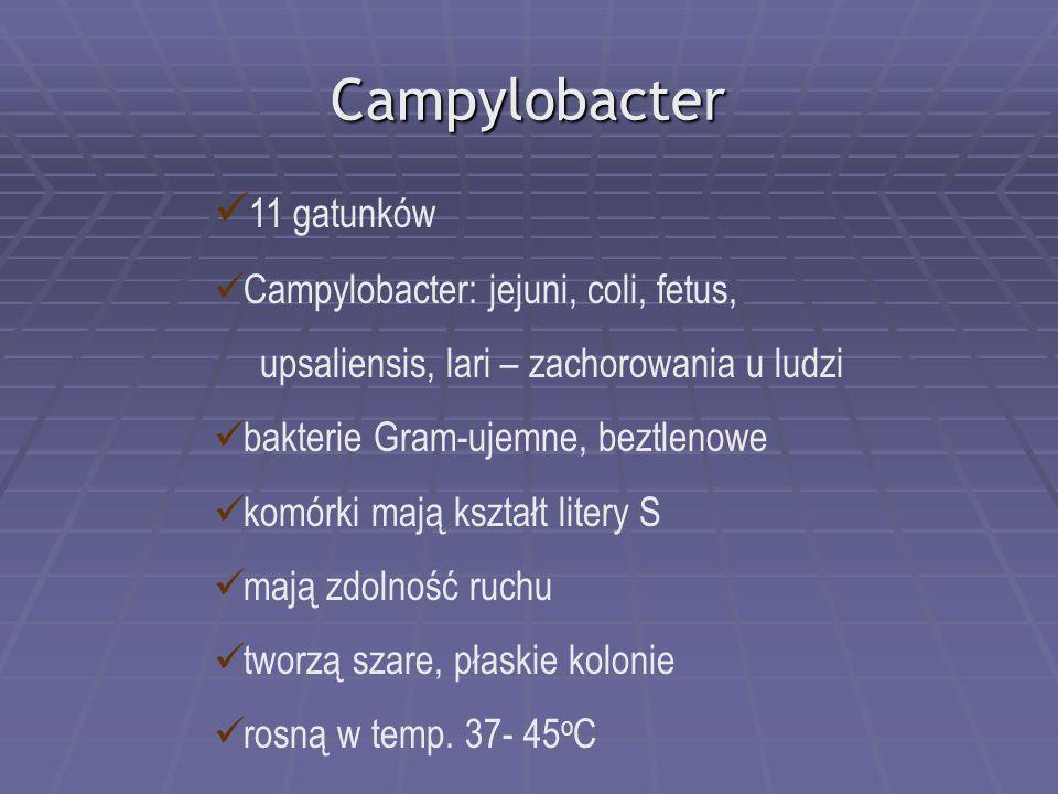Campylobacter 11 gatunków Campylobacter: jejuni, coli, fetus,