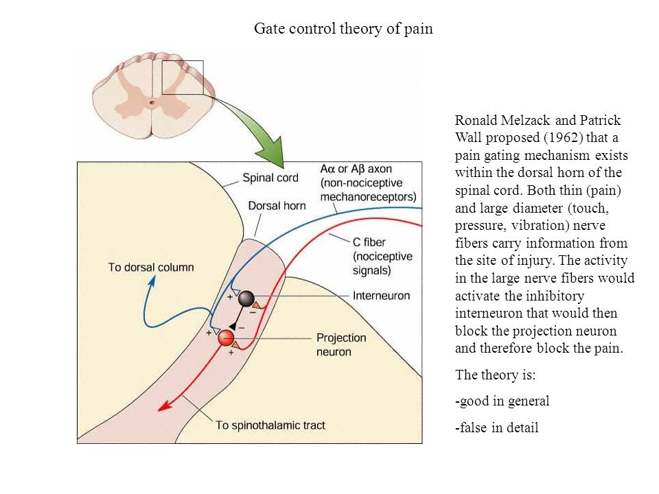 Gate control theory of pain