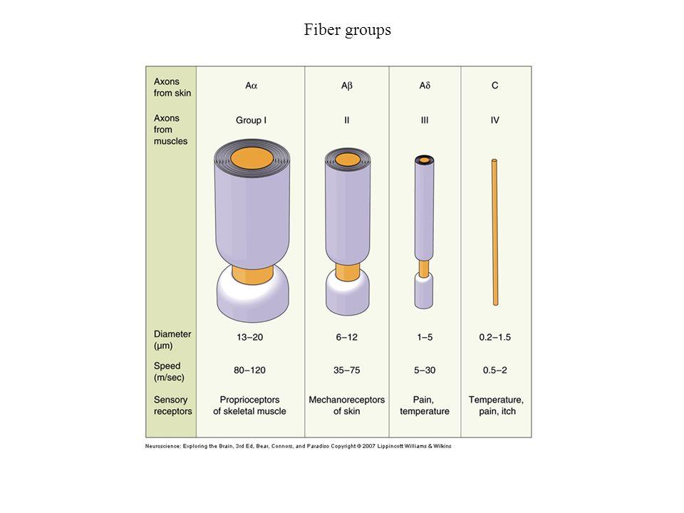 Fiber groups