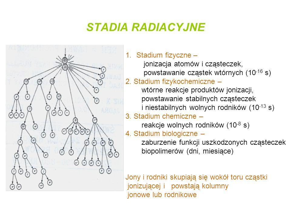 STADIA RADIACYJNE Stadium fizyczne – jonizacja atomów i cząsteczek,