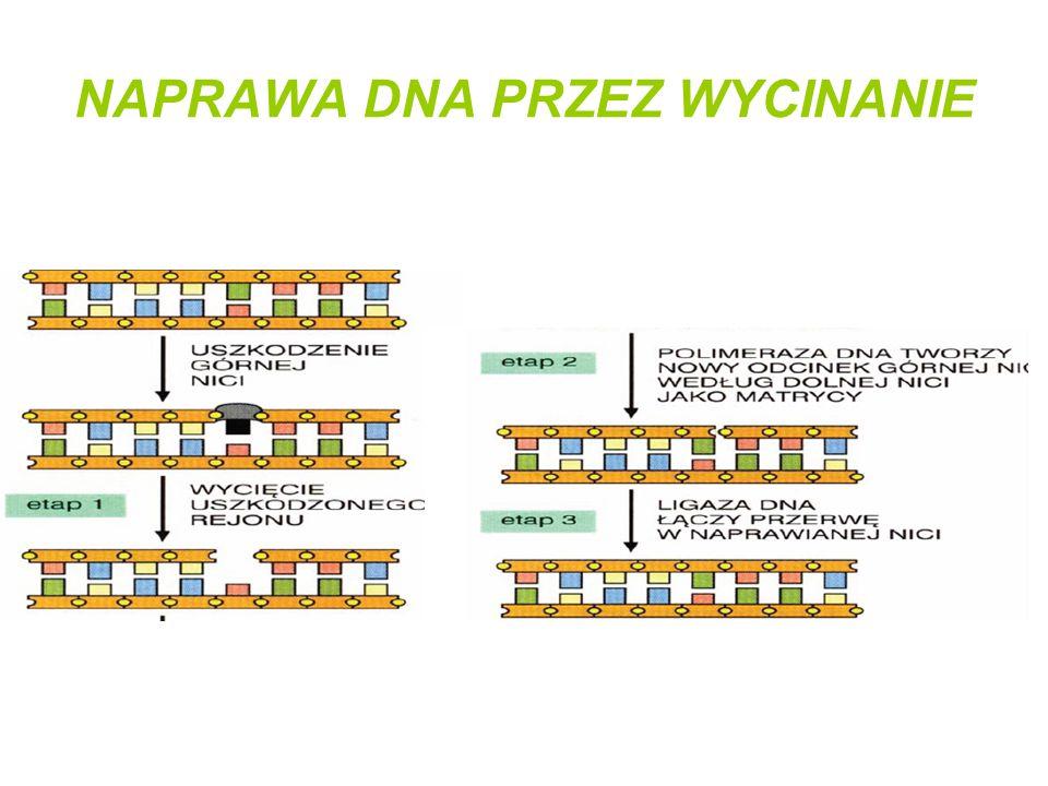 NAPRAWA DNA PRZEZ WYCINANIE