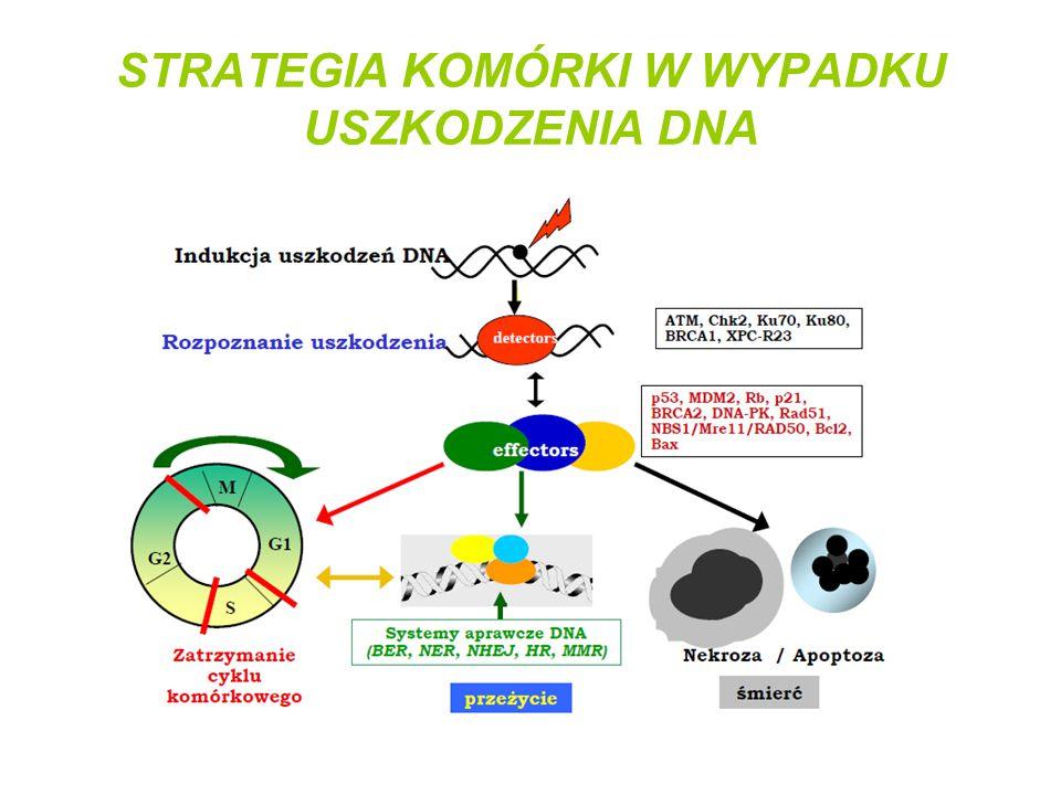 STRATEGIA KOMÓRKI W WYPADKU USZKODZENIA DNA