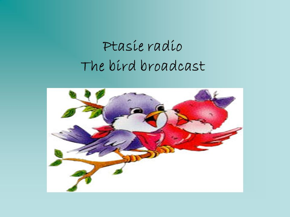 Ptasie radio The bird broadcast
