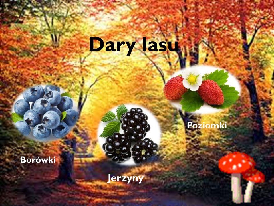 Dary lasu Dary lasu Poziomki Borówki Jerzyny