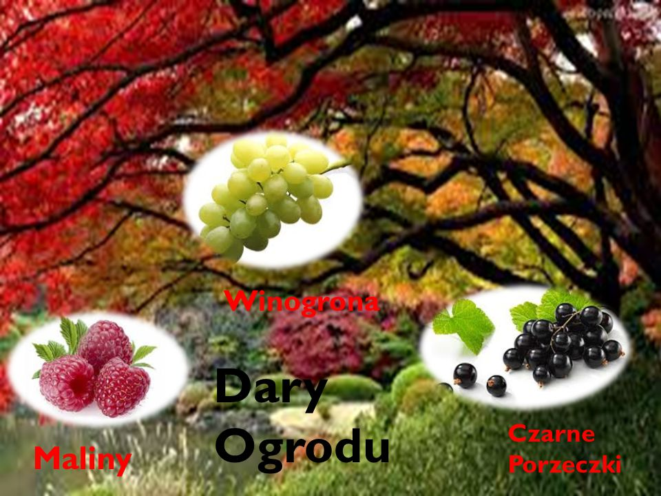 Dary ogrodu Winogrona Dary Ogrodu Czarne Porzeczki Maliny