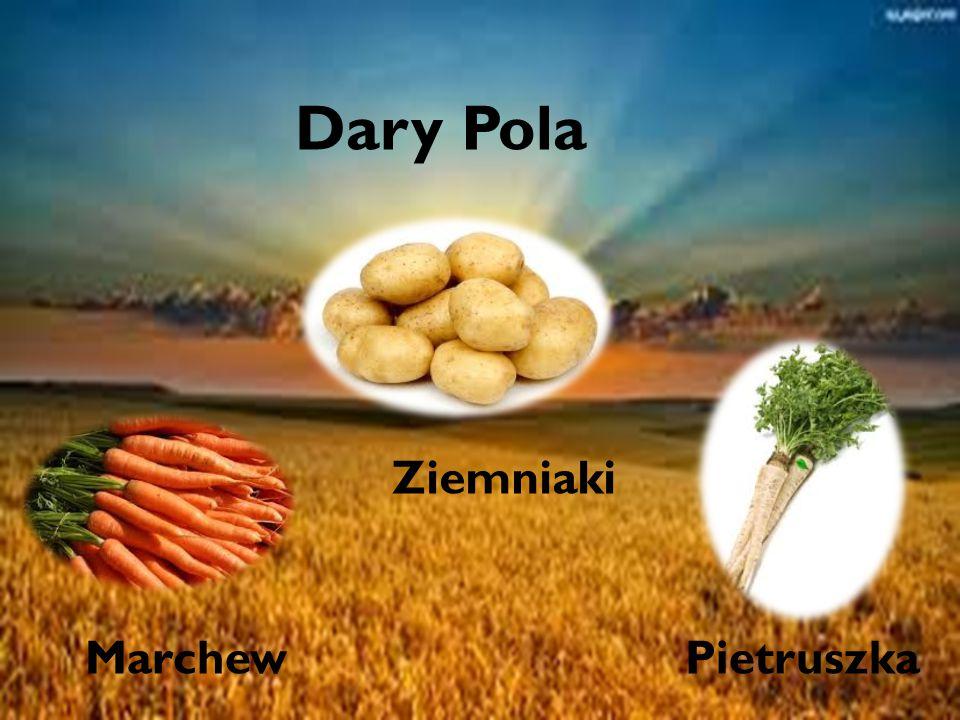Dary pola Dary Pola Ziemniaki Marchew Pietruszka
