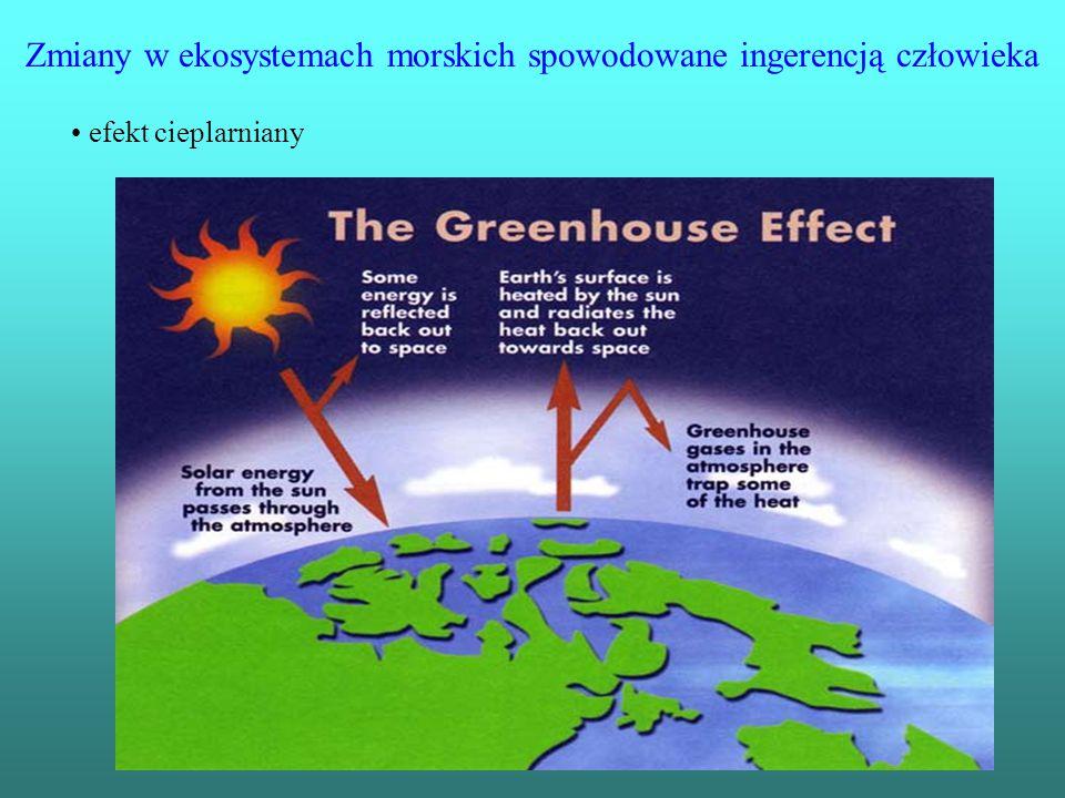 Zmiany w ekosystemach morskich spowodowane ingerencją człowieka