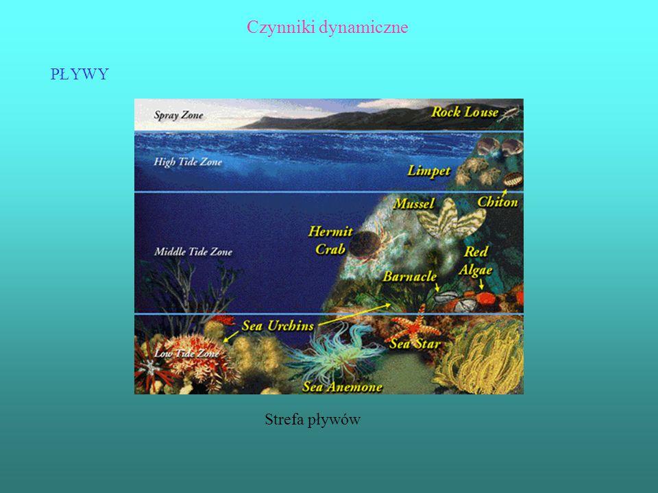 Czynniki dynamiczne PŁYWY Strefa pływów