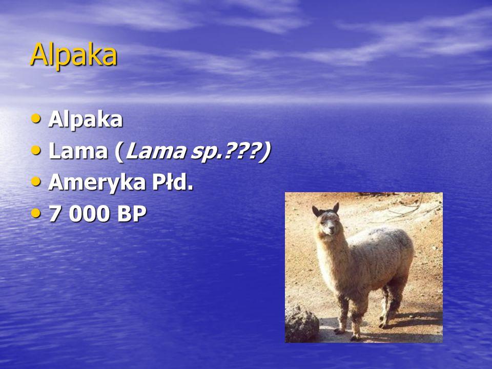 Alpaka Alpaka Lama (Lama sp. ) Ameryka Płd. 7 000 BP