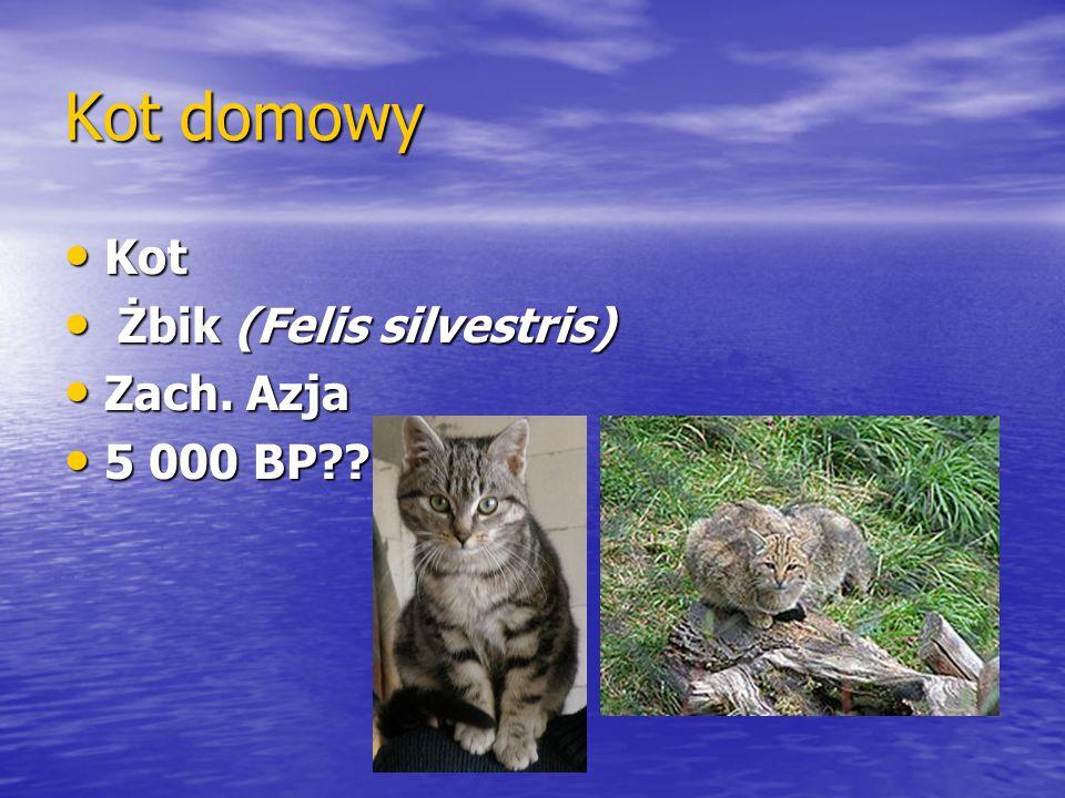 Kot domowy Kot Żbik (Felis silvestris) Zach. Azja 5 000 BP
