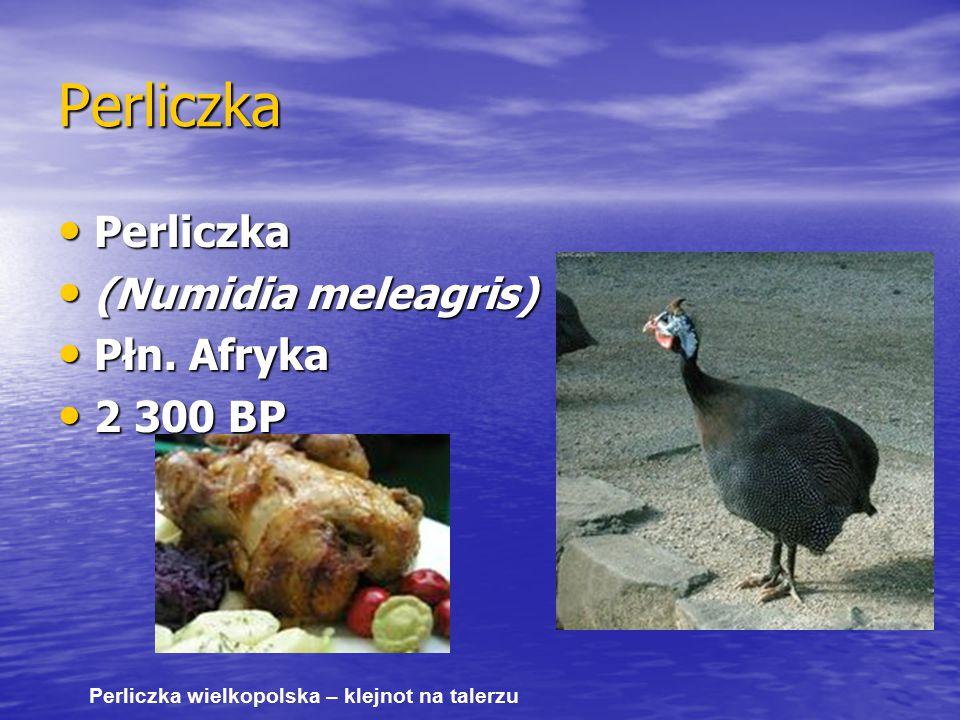Perliczka Perliczka (Numidia meleagris) Płn. Afryka 2 300 BP
