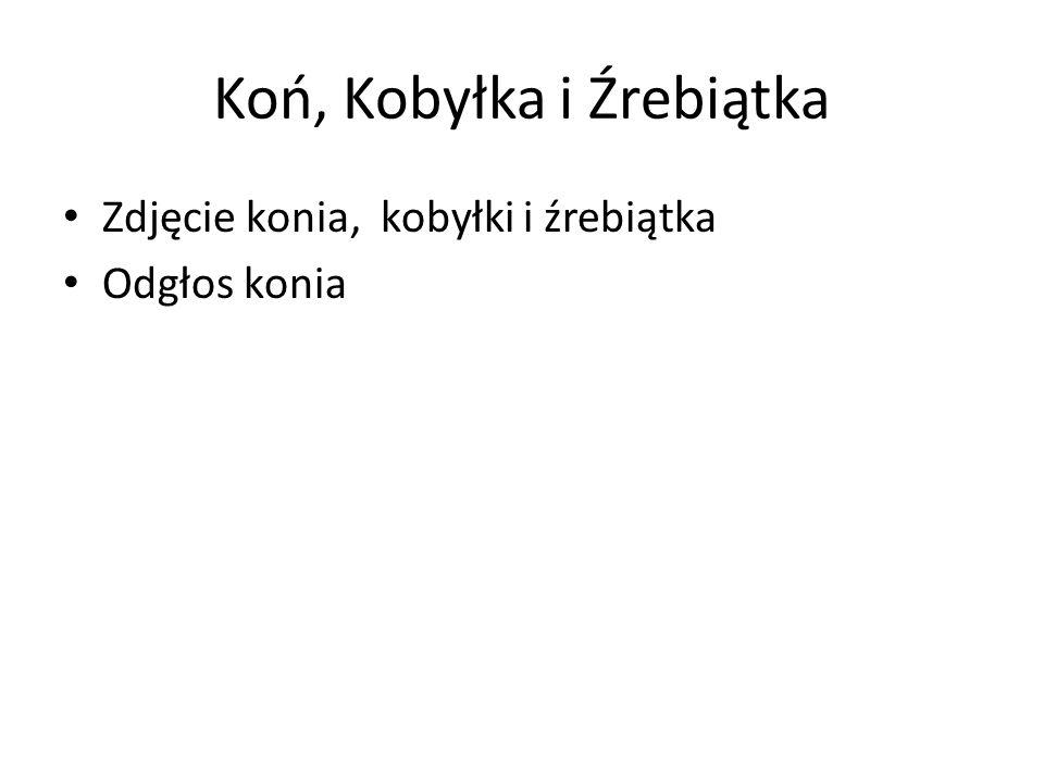 Koń, Kobyłka i Źrebiątka