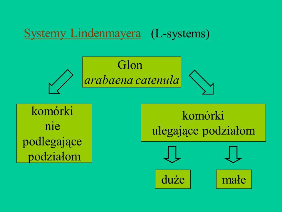 Systemy Lindenmayera(L-systems) Glon. arabaena catenula. komórki. nie. podlegające. podziałom. komórki.